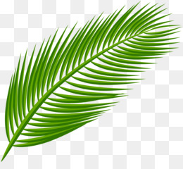 Palm Leaf Manuscript PNG and Palm Leaf Manuscript.