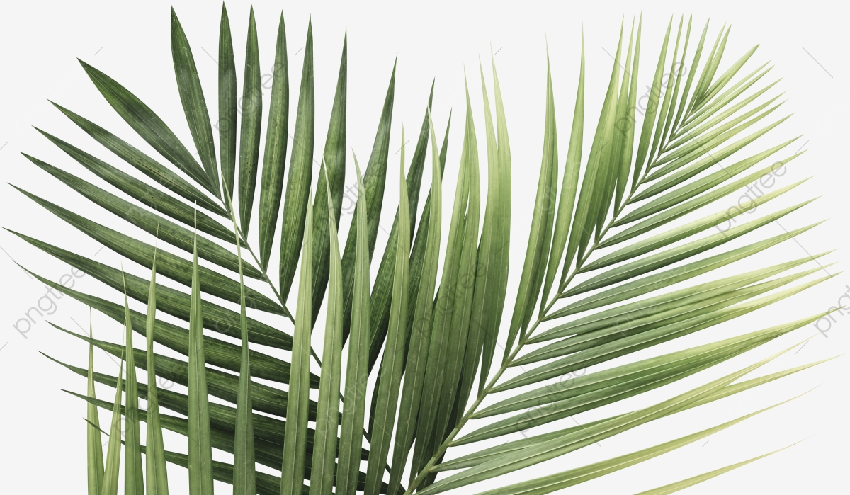 Palm Leaf, Tropical, Leaf, Palm PNG Transparent Clipart.