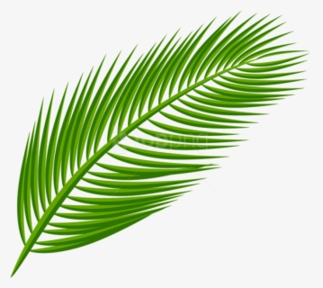 Free Palm Leaves Clip Art with No Background , Page 2.