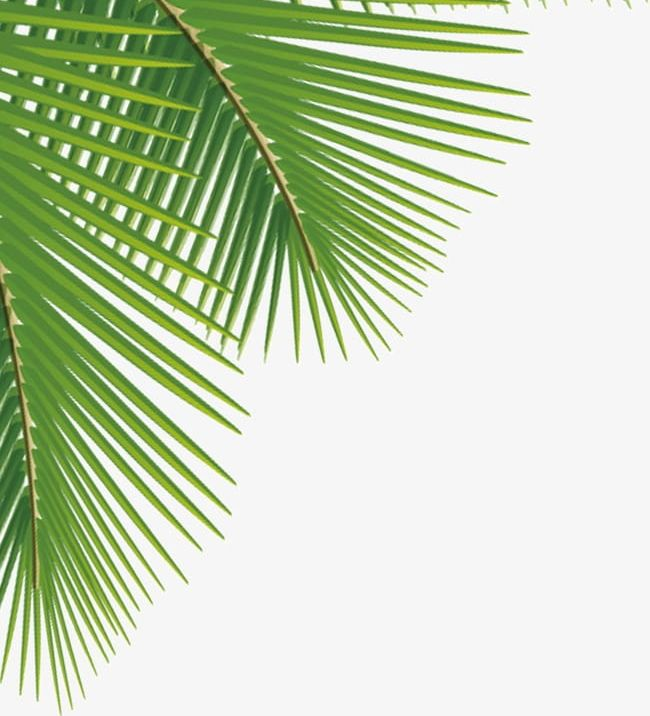 Palm Leaves PNG, Clipart, Coco, Leaf, Leaves Clipart, Palm.