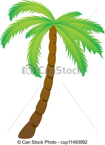 EPS Vectors of Palm tree, isolated vector illustration csp11493992.