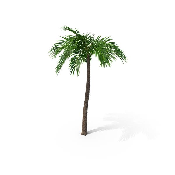 Palm PNG Images & PSDs for Download.