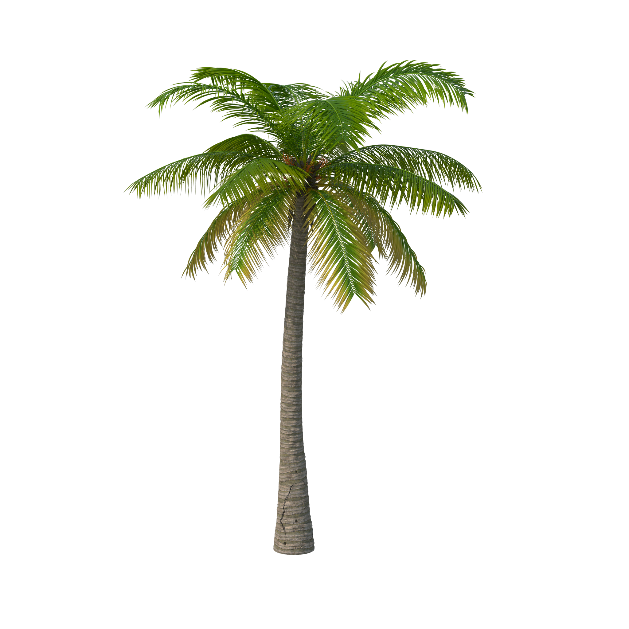 Palm Tree PNG Image.