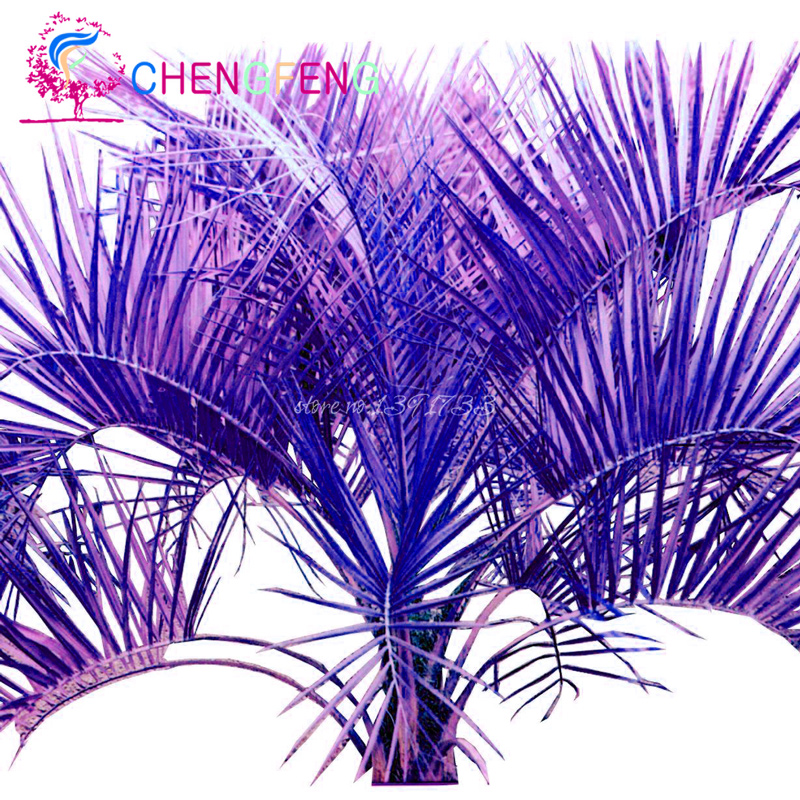 Online Buy Wholesale palm seeds from China palm seeds Wholesalers.