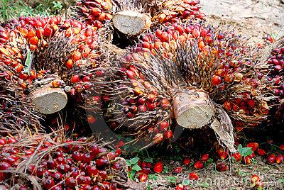 Palm seeds clipart #6
