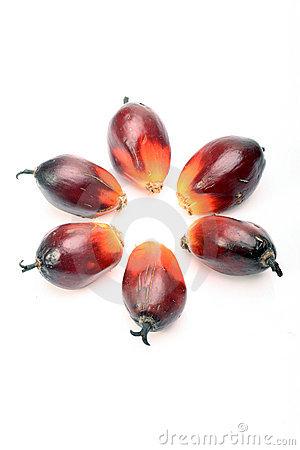 Palm seeds clipart #20