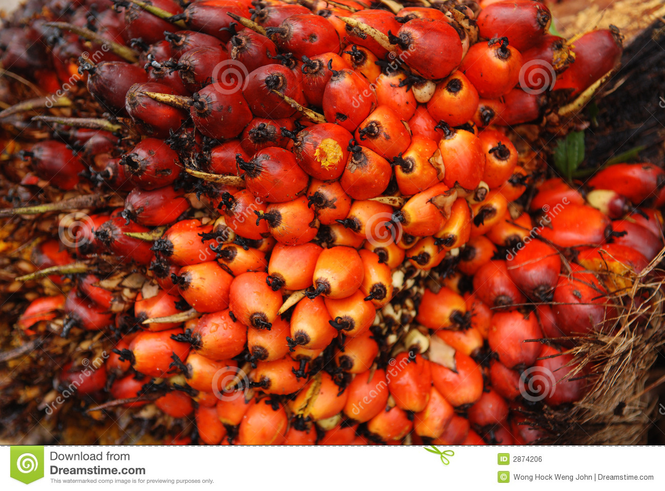 Palm Tree Seeds Stock Photos, Images, & Pictures.