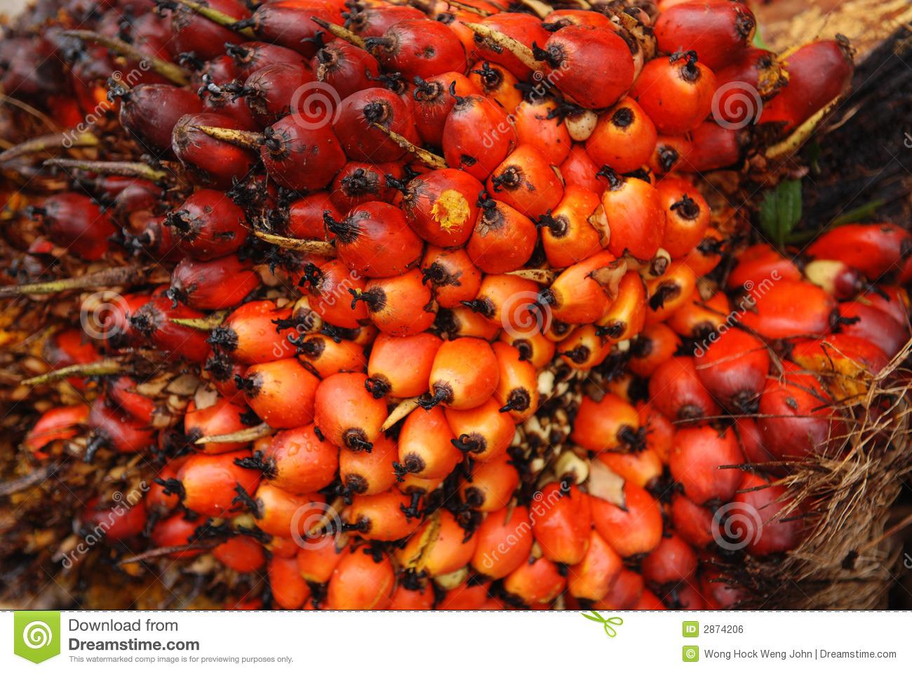 Palm seeds clipart #17