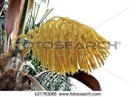 Palm seeds clipart #14