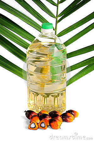 Fresh Palm Oil Seeds Stock Photography.