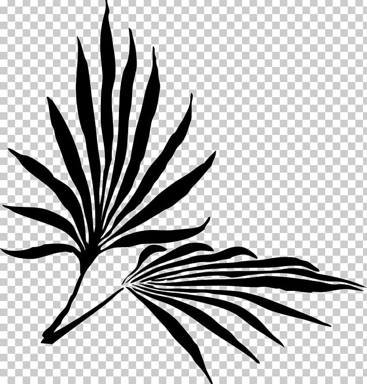 Palm Sunday Palm Branch Easter PNG, Clipart, Arecaceae.