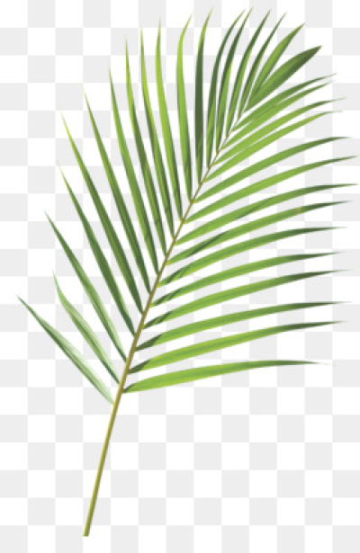 Download Free png Palm Sunday PNG & Palm Sunday Transparent.
