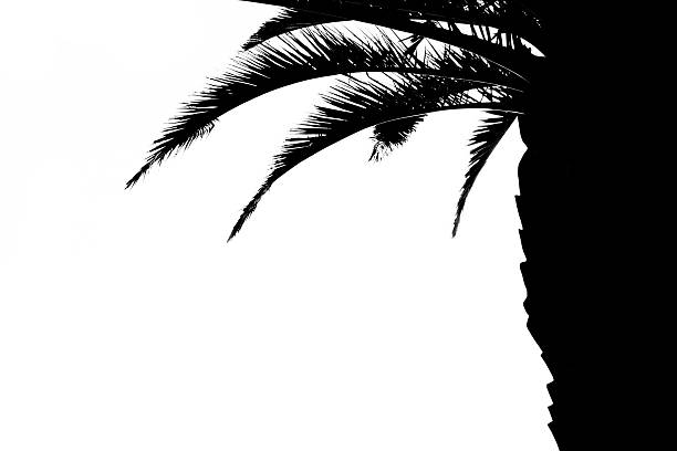 Palm tree bark clipart #1