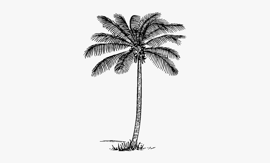 Coconut Tree Clipart.