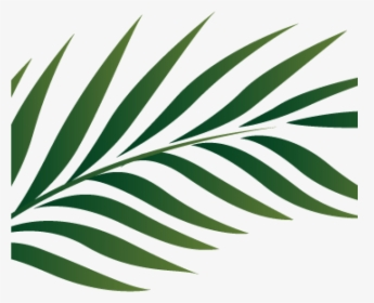 Leaf Arecaceae Palm Branch Clip Art.