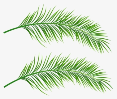 Free Palm Branch Clip Art with No Background.