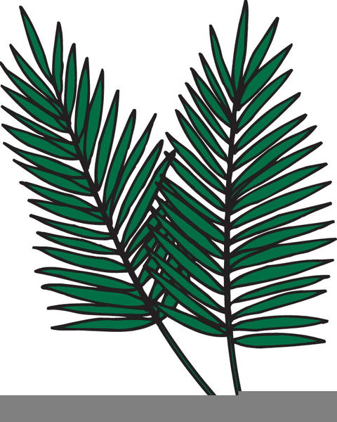 Palm Fronds Clipart.
