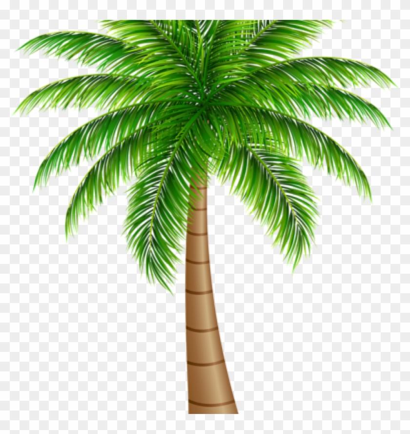 Palm Clipart Palm Tree Large Png Clip Art Image Art.