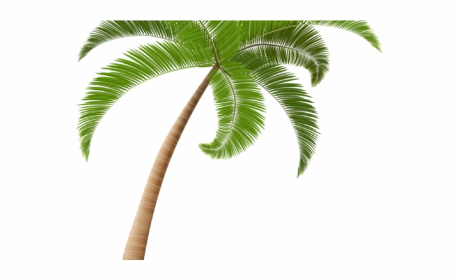 Palm Tree Clipart Kawaii.