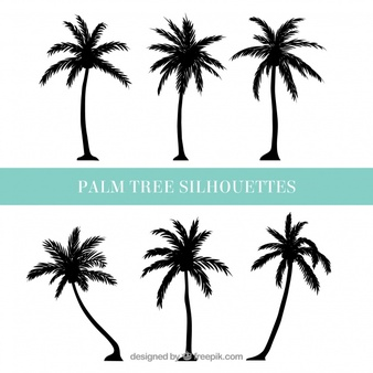 Palm Tree Vectors, Photos and PSD files.