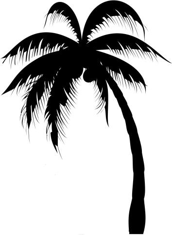 Palm Tree Clipart Black And White No Background.