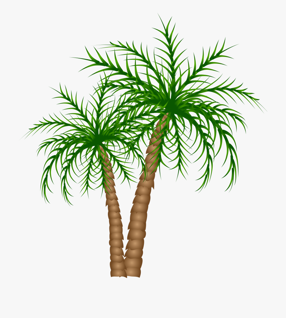 Palm Trees Png Clipart Picture.