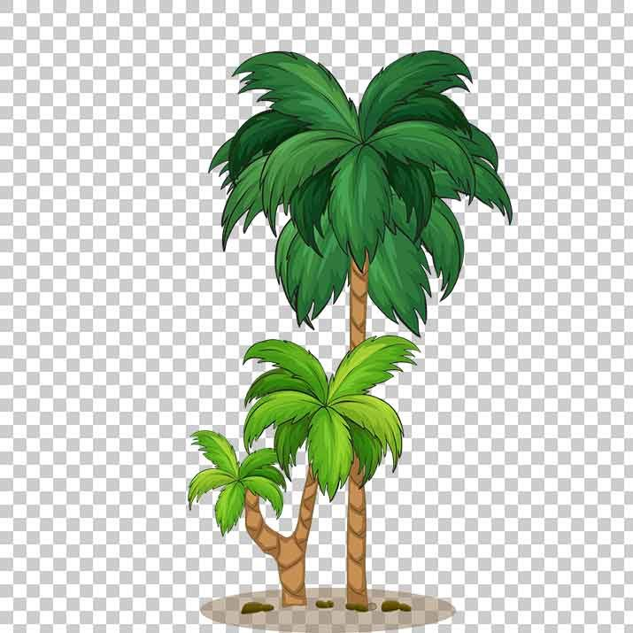 Palm Tree Clipart PNG Image Free Download searchpng.com.