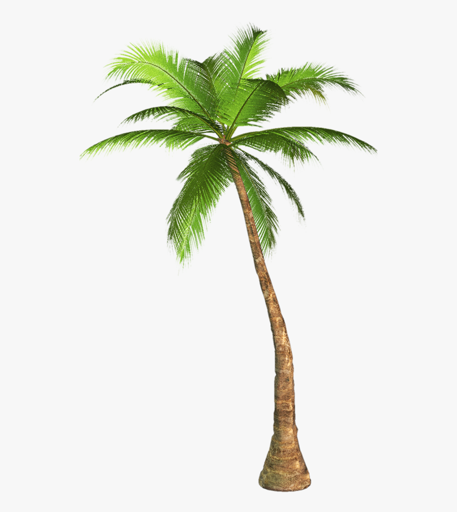Banner Black And White Palm Tree Clipart No Background.
