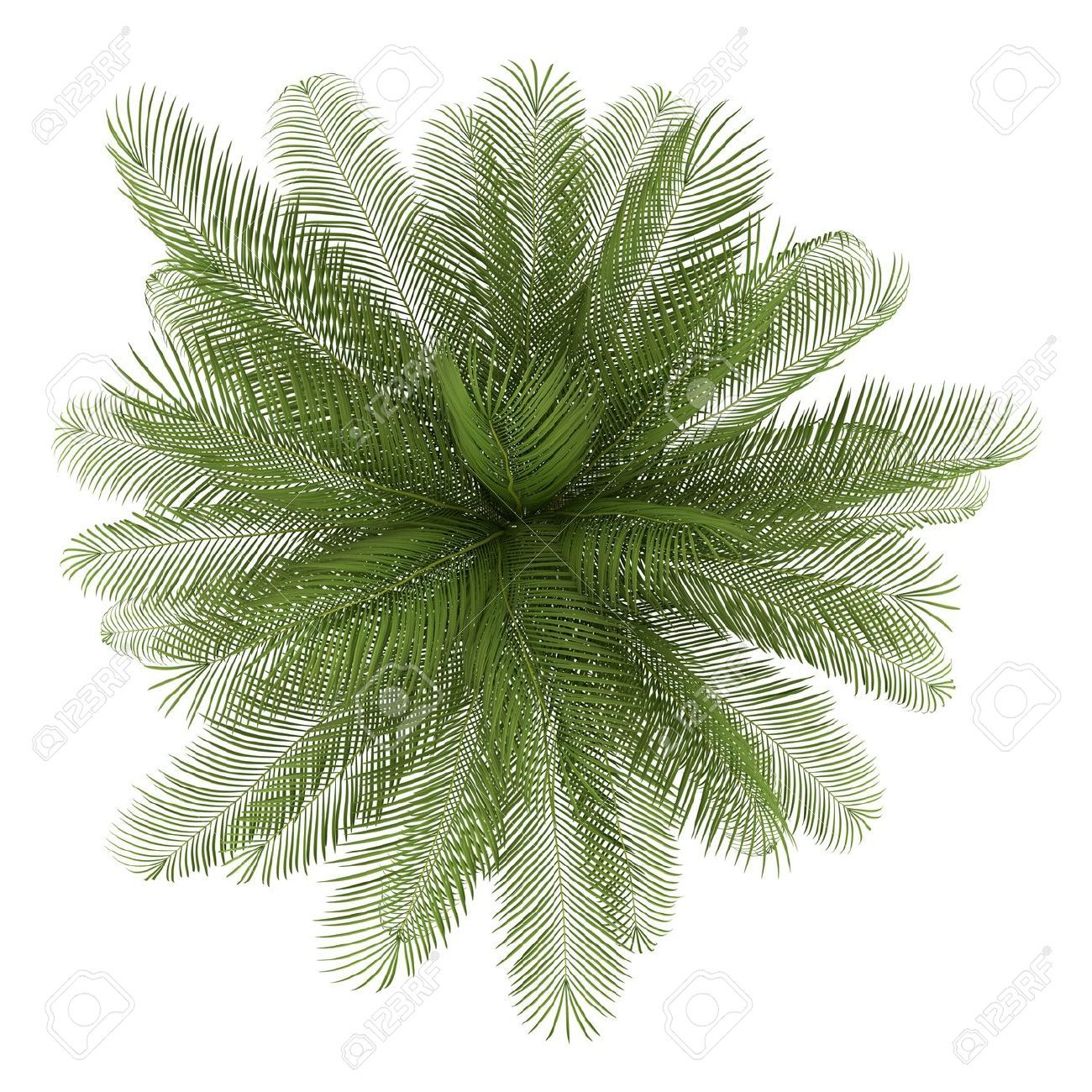 Bilderesultat for vector california palm trees plan.