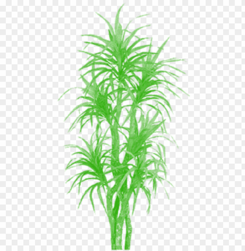 bamboo tree clipart png, tree png plan, tree png clipart.