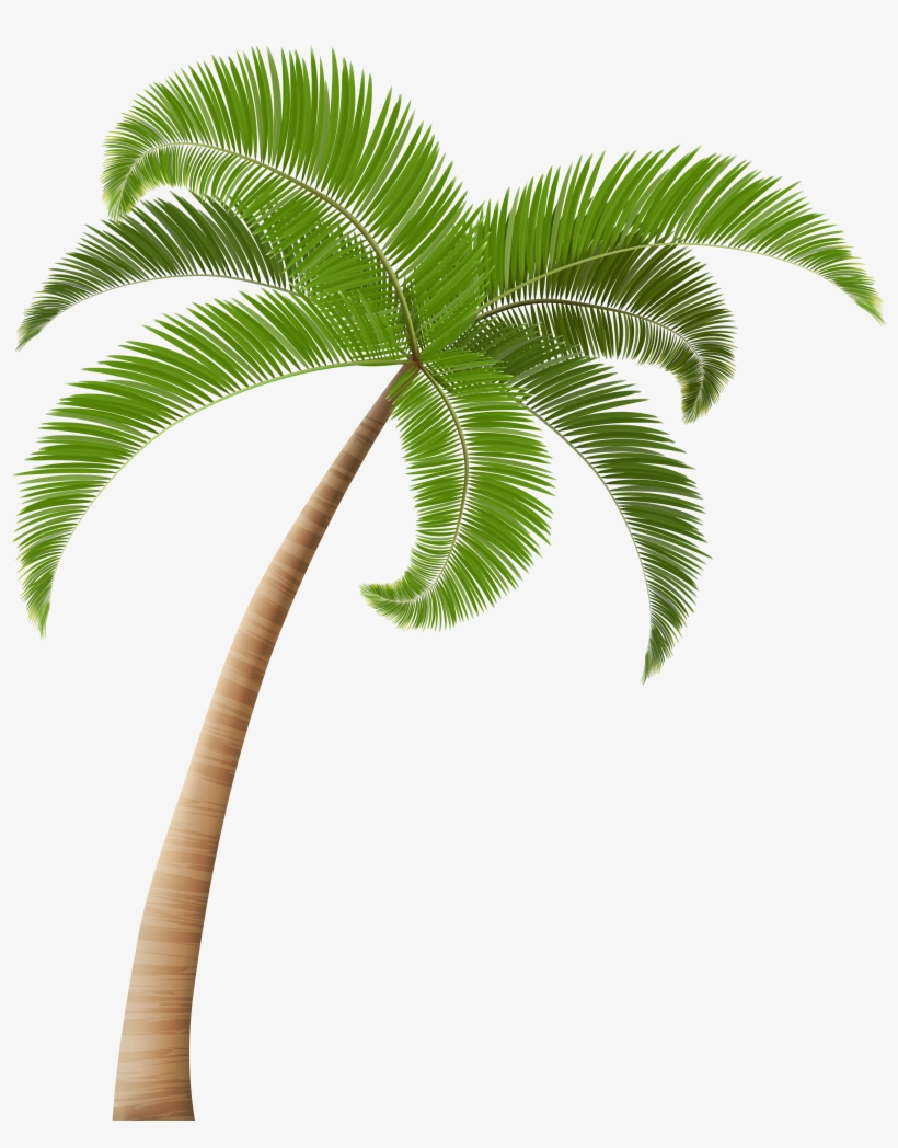 Palm Tree Png, Palm Trees, Hawaiian, Clip Art, Palm.