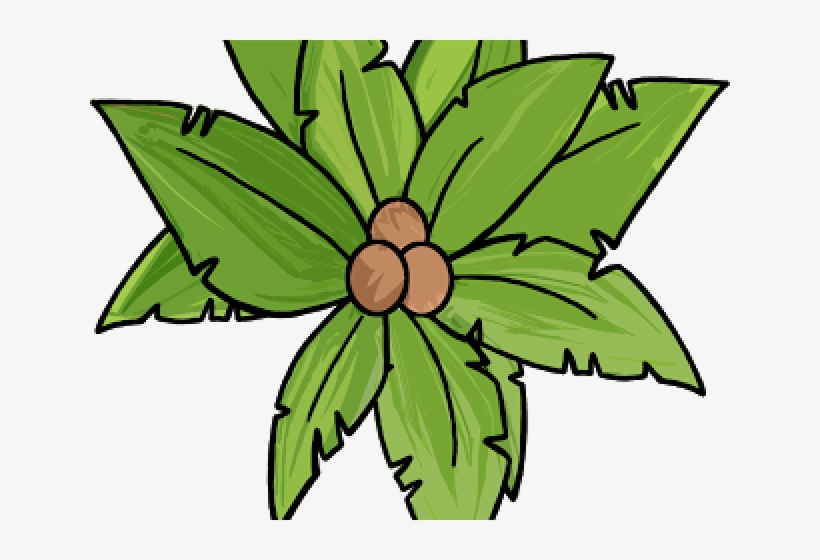 Palm Tree Clipart Top View.