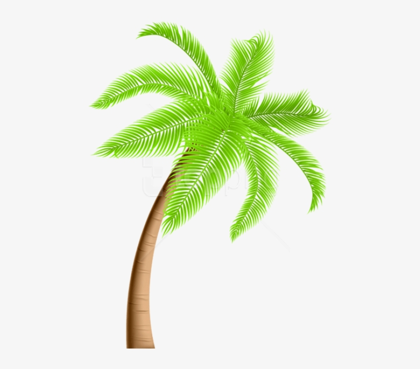 Free Png Download Palm Tree Png Png Images Background.