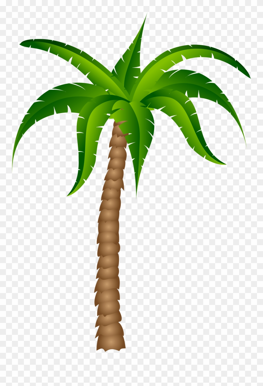 Palm Tree Transparent Background Clipart (#236).