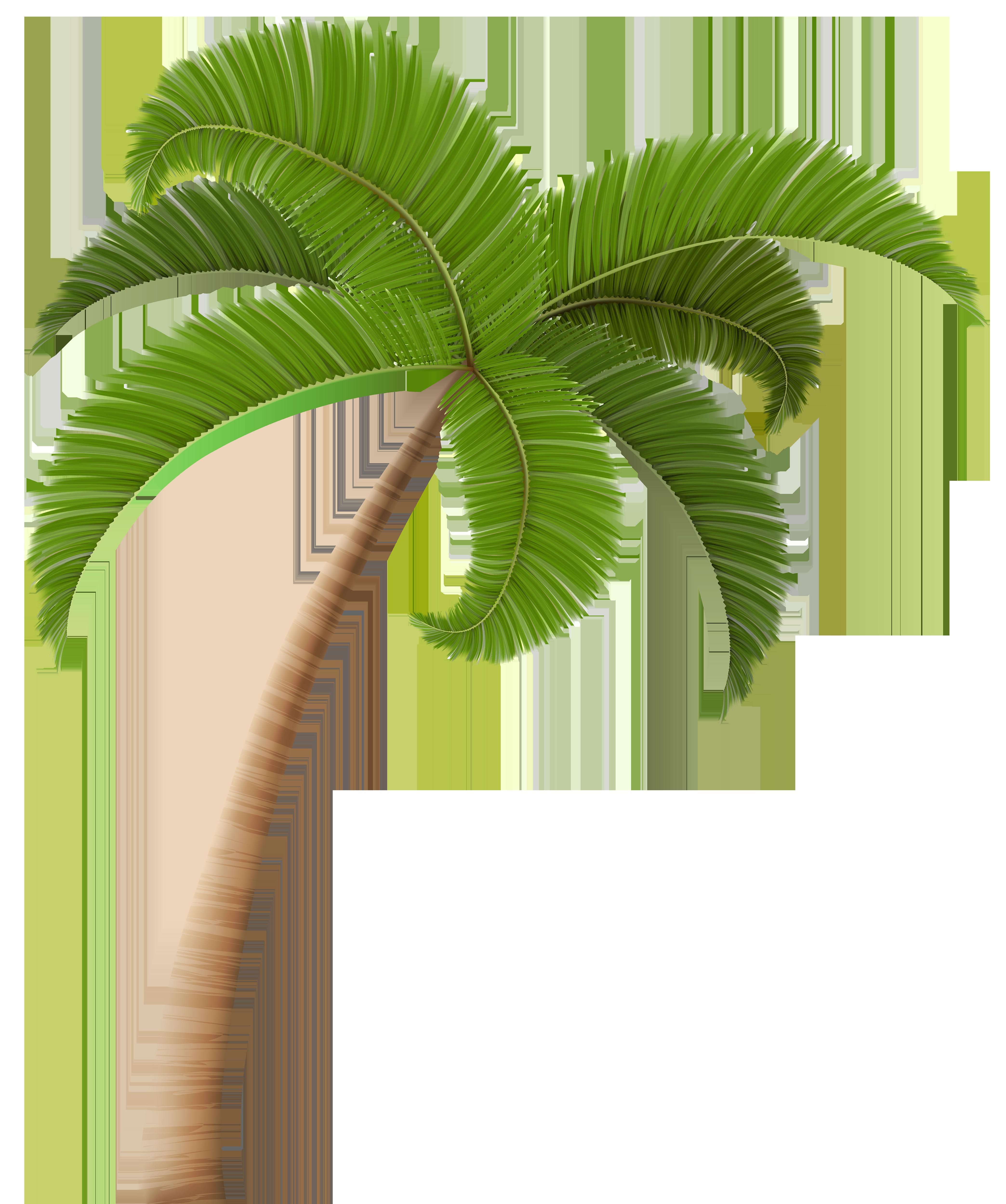 Palm trees Clip art.
