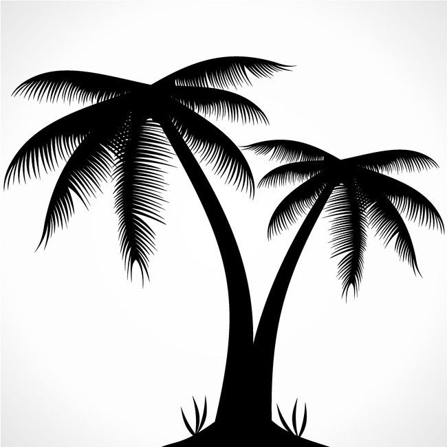 Coconut Tracing Leaf Tree Background.
