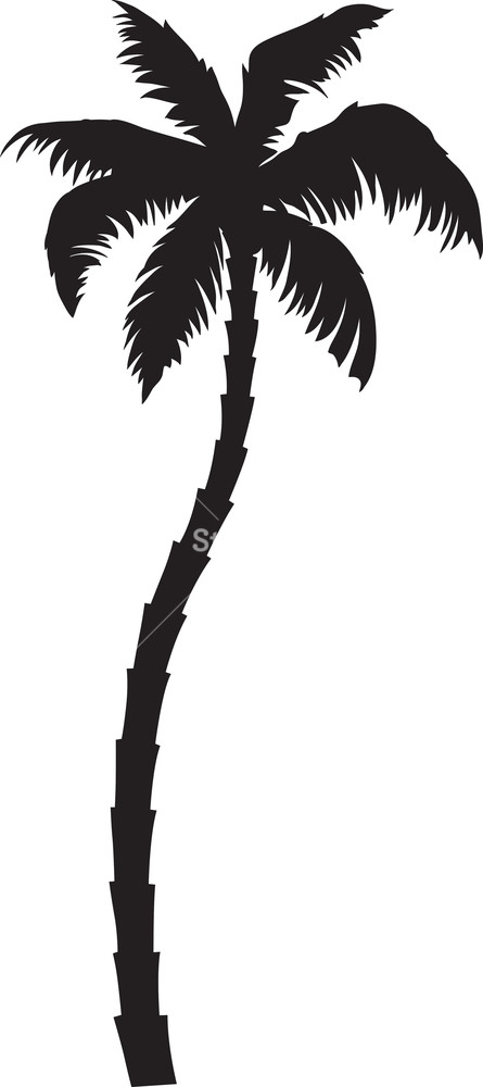 Vector Palm Tree Royalty.