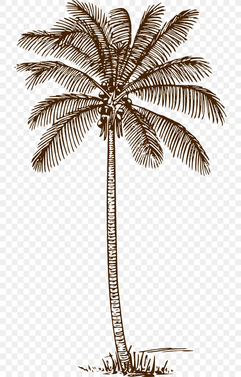 Palm Trees Drawing Clip Art Line Art Coconut, PNG.