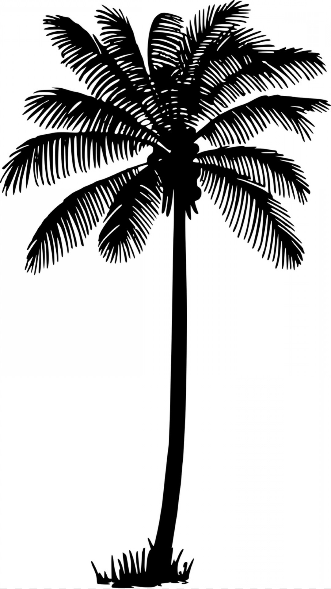 Palm Tree Drawing Png at PaintingValley.com.
