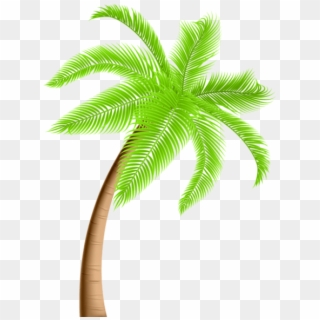 Free Palm Trees PNG Images.