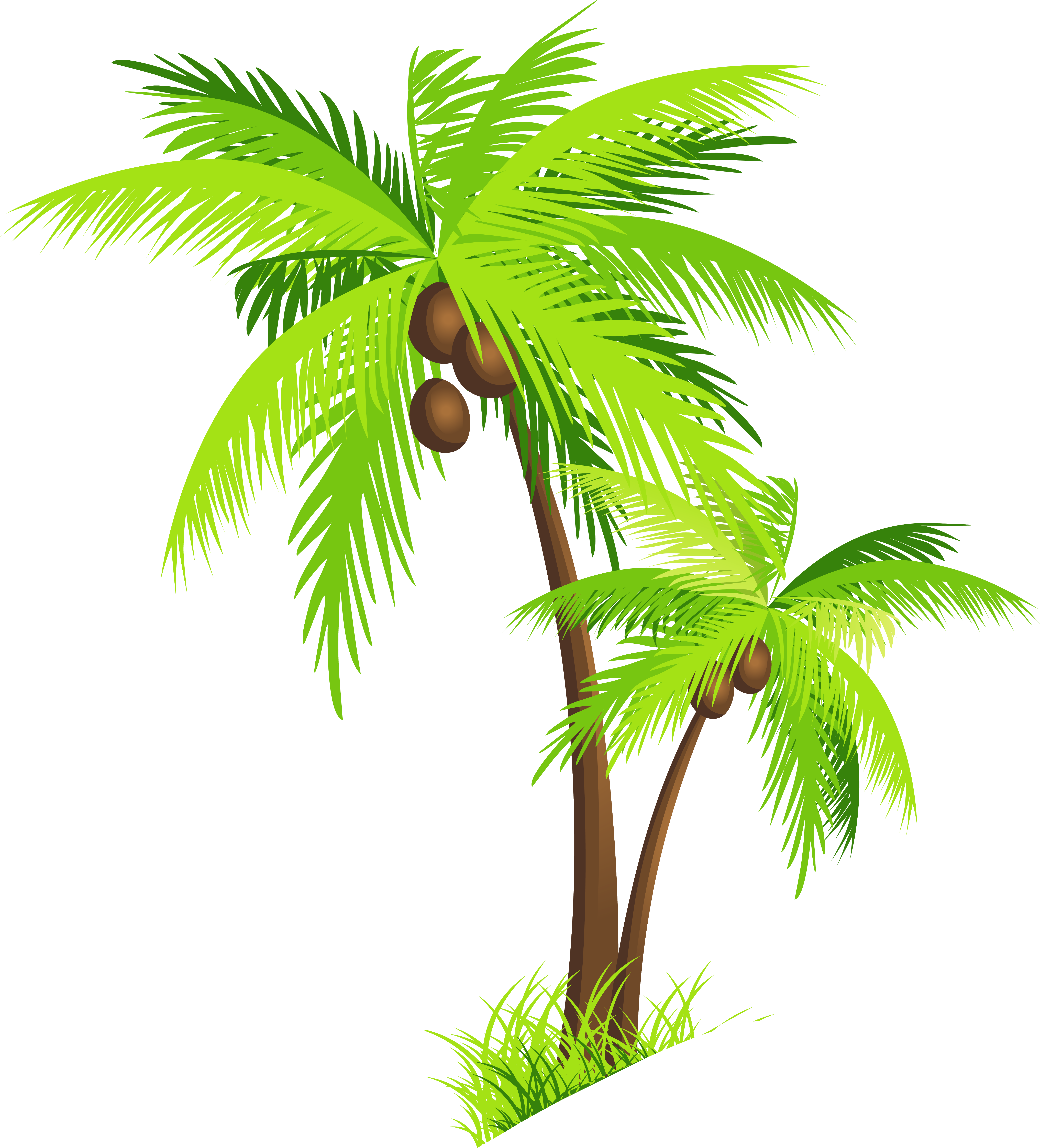 Palm tree coconut clipart free images.