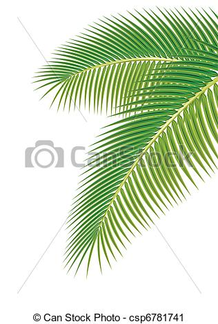 Vector Clip Art of Leaves of palm tree on white background. Vector.