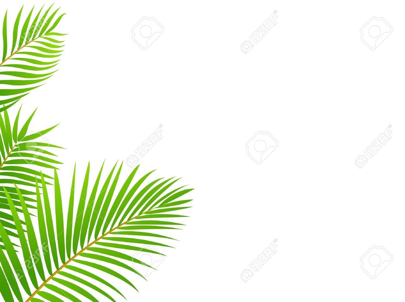 Palm Tree Frame Background Royalty Free Cliparts, Vectors, And.