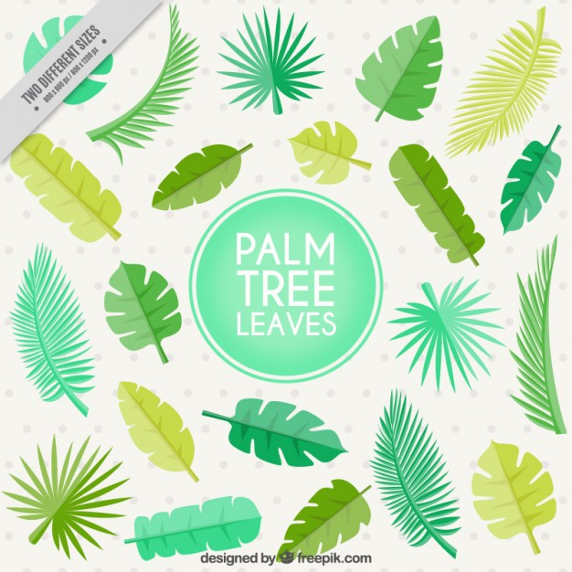 Flat palm tree leaves background Vector.