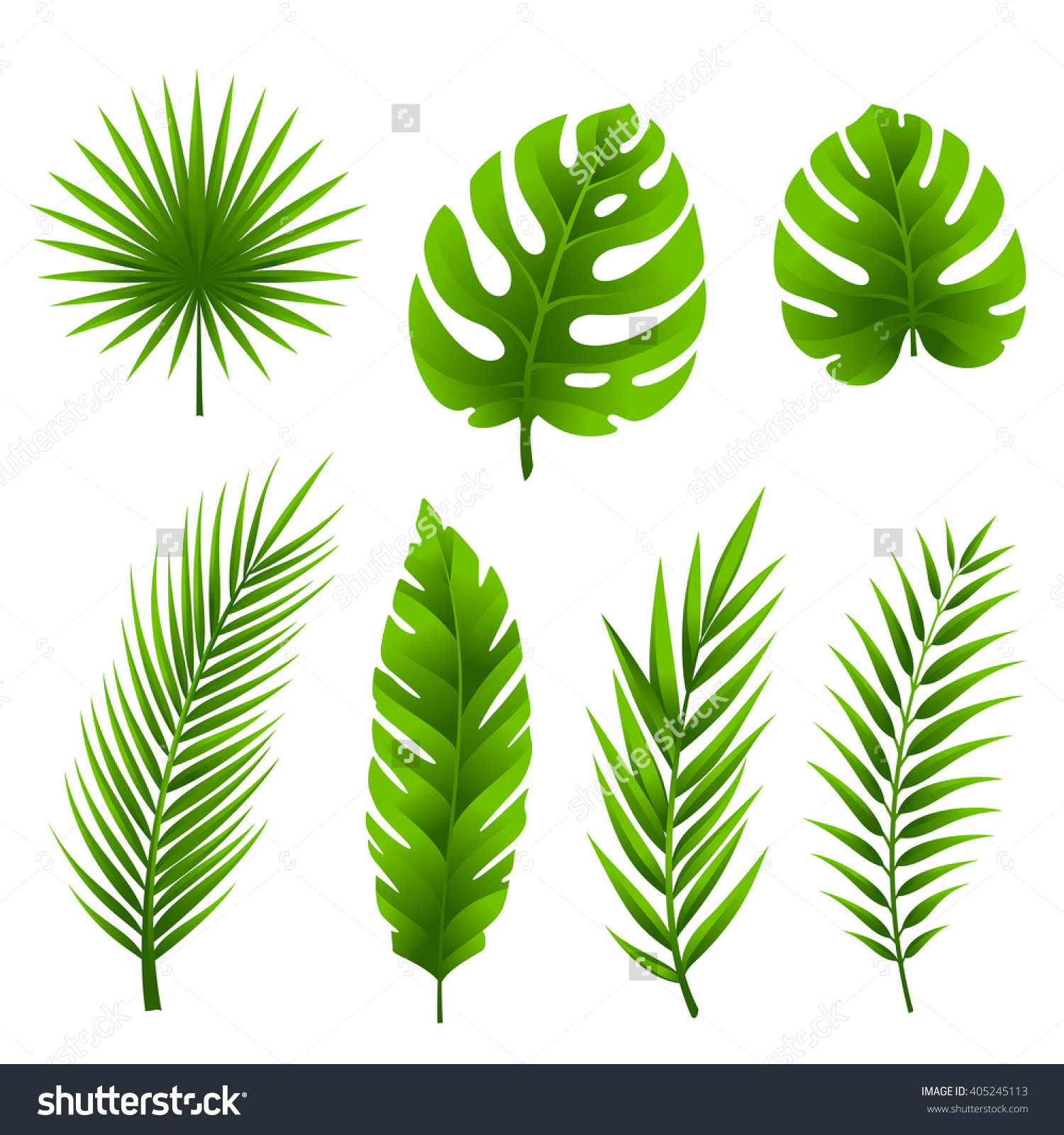 Jungle Tropical Palm Tree Leaves Collection Stock Vector 405245113.