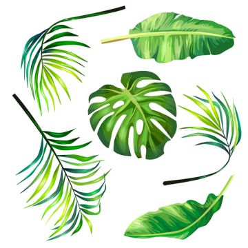 Palm Tree PNG Images, Download 880 Palm Tree PNG Resources.