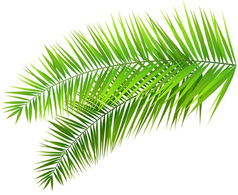 Palm Leaf Clipart.