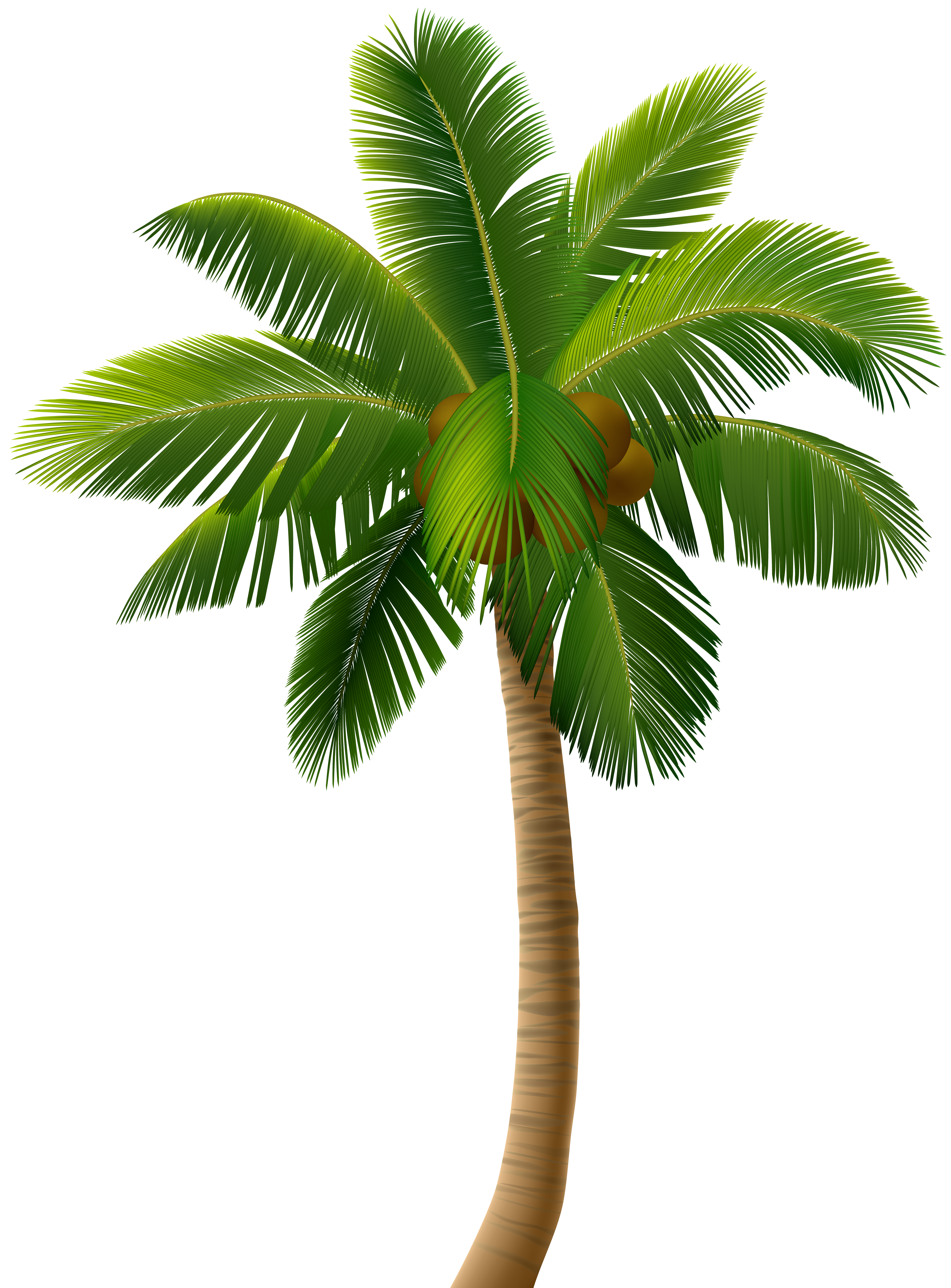Palm Tree PNG Clip Art Image.