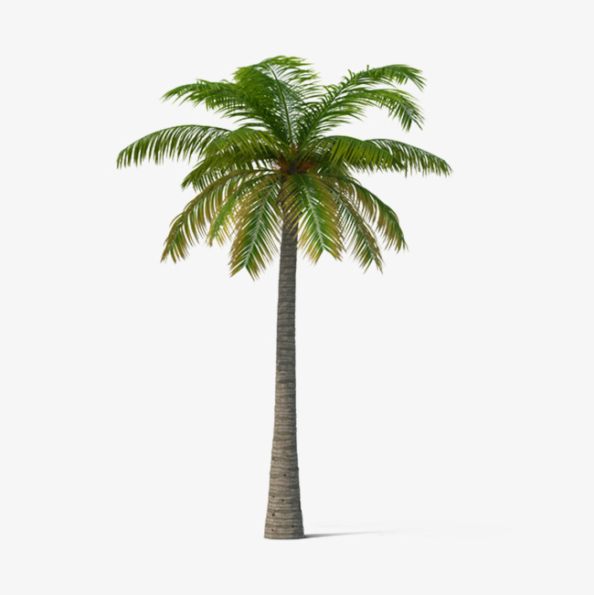 Palm Tree Png, Vectors, PSD, and Clipart for Free Download.