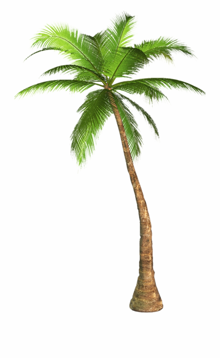 Vaporwave Palm Tree Png.